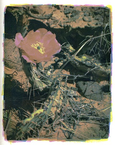 Gum Dichromate Photograph of Cactus Flower