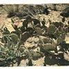 Desert Flower #5