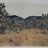 Mojave4_2of3