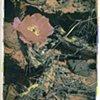 Desert Flower #7