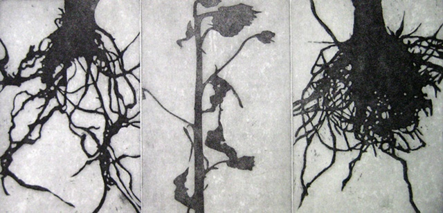 etching plant forms