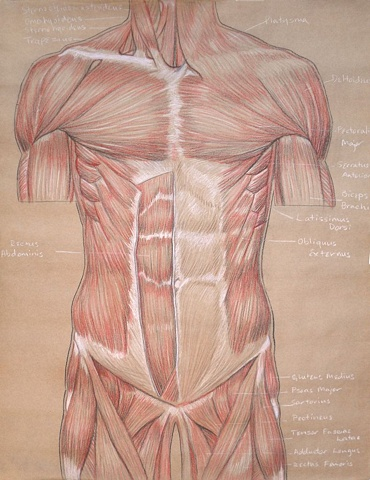 chest and abdomen study