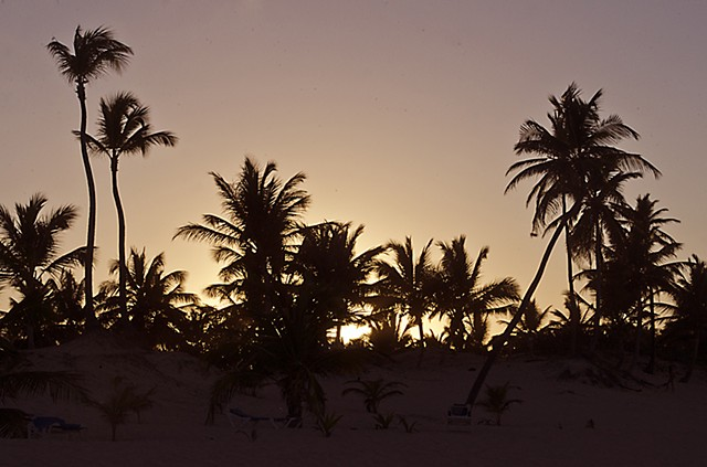 Palm trees, beach, sunset