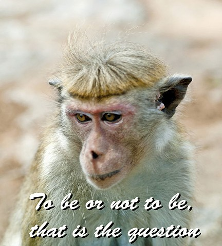 monkey, proverb, nature, saying