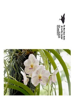 Greeting card, ochid, flower
