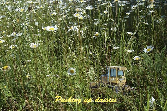 Pushing up daisies, bulldozer, caterpillar
