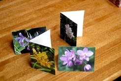 Greeting cards, orchid, flower
