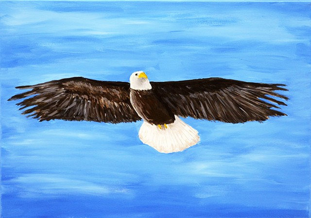 nature, bird, eagle, bald eagle,soaring