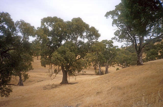 Australia, Queensland, farming, trees grassland, nature