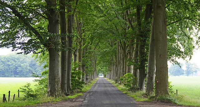 Trees, beech, lane, wooded lane