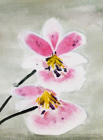 orchid, flower, water colour
