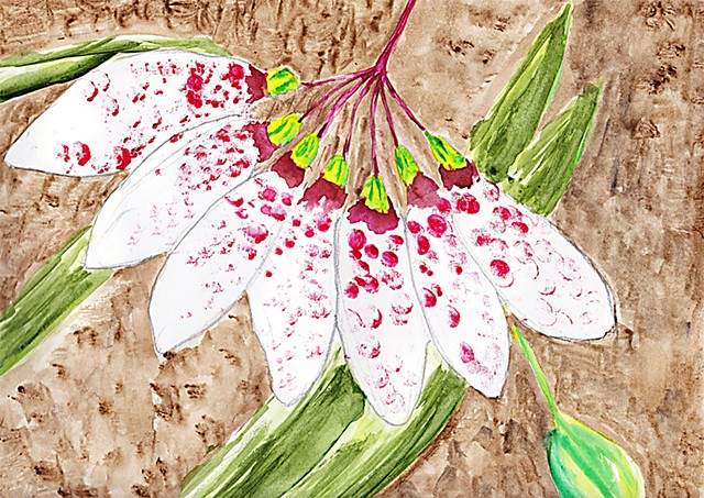Orchid, flower, water colour, painting, Bulbophyllum lepinum