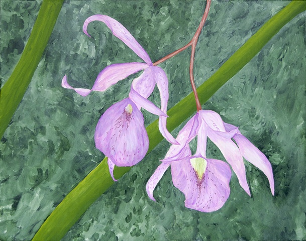 Flower, laelia orchid