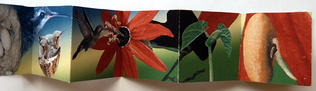 Accordion Book -detail