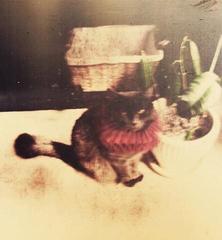 Little Kitty 2009