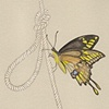 Giant Swallowtail & Knot