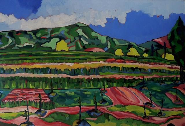 Mazandaran Fields