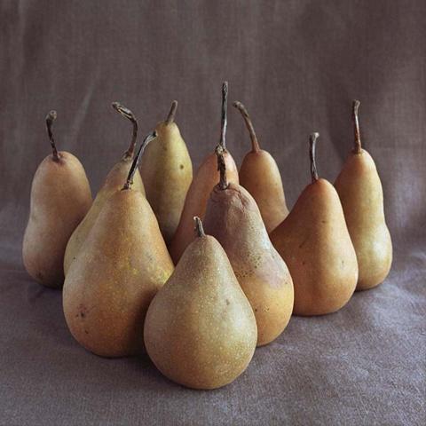 Pear Clan