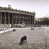 The Lustgarten