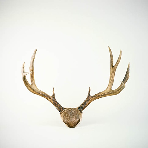 Antlers No. 3