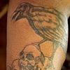 Crow on Skulls