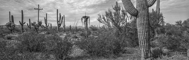 Saguaro National Park (West Unit), Arizona