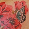 Watercolor poppies & butterfly cover-up