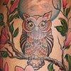 Magnolias and owl