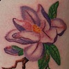 Purple magnolias on the ribs