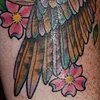 hawk wing, compass, cherry blossoms