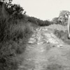 Untitled (Runaway)