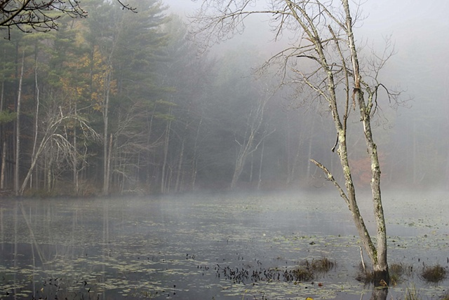 Fog over swamp 2
