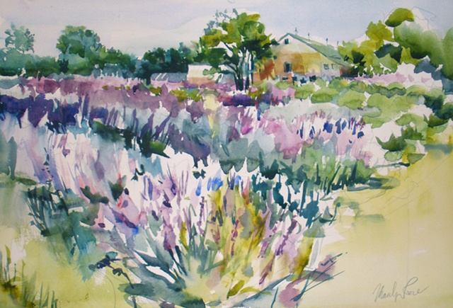 Lavender Fields Forever (SOLD)