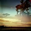 Wetland Series 3