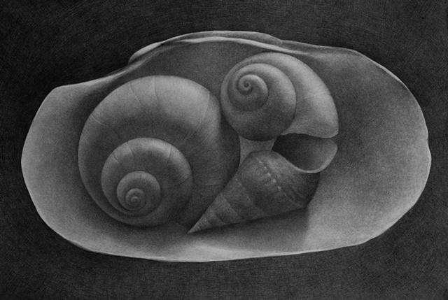 Shell I (Springshells)