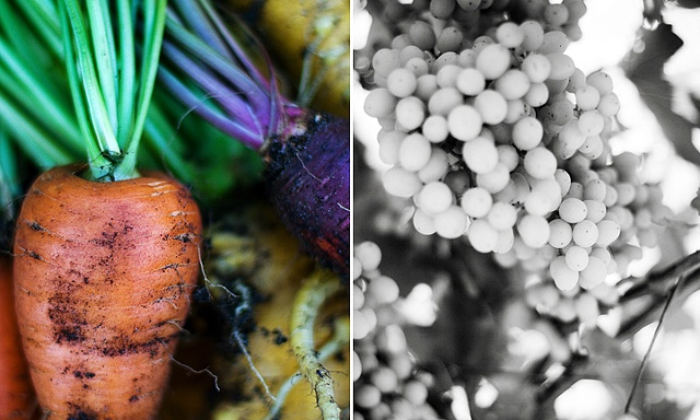 Slowfood Project, Carrots and Grapes