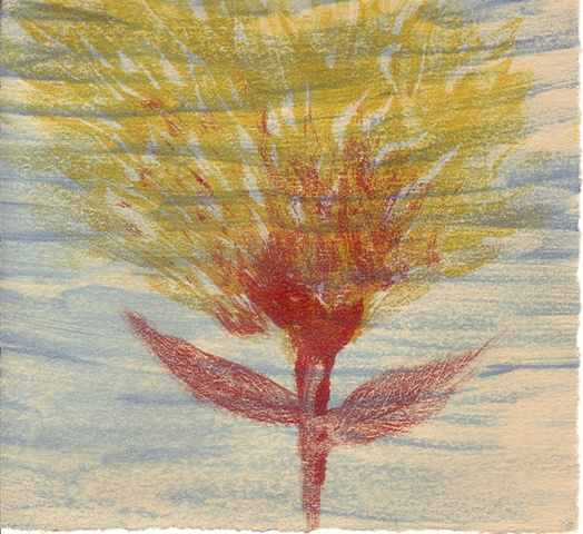 """""""Fire Flower"""" monotype print by Aijung Kim"""