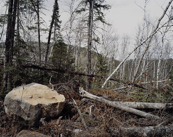 Blowdown Debris, Near Magnetic Rock, Gunflint Trail, Superior National Forest 2001