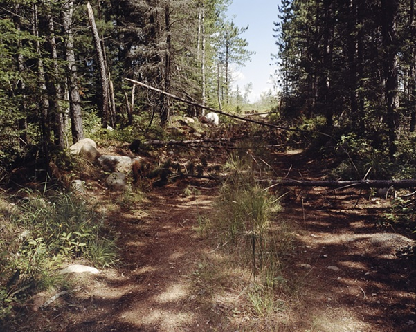 Logging Road off Upland Trail 2001