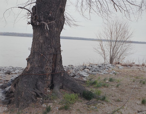 Cottonwood, S.P. Reynolds Fishing Access, Caruthersville, Missouri 2016
