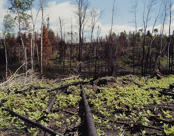 Last Spring's Fire, Near Elbow Lake, Minnesota 2000