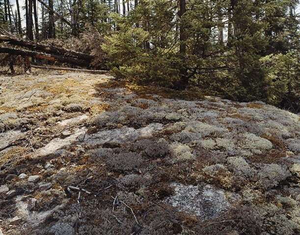 Lichen, U. S. Forest Service Road 1351, Gunflint Trail 2003