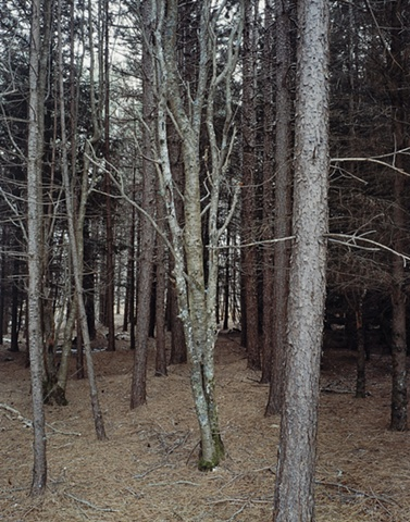 Ash, Near Iona's Beach, Twin Points, Minnesota 2003