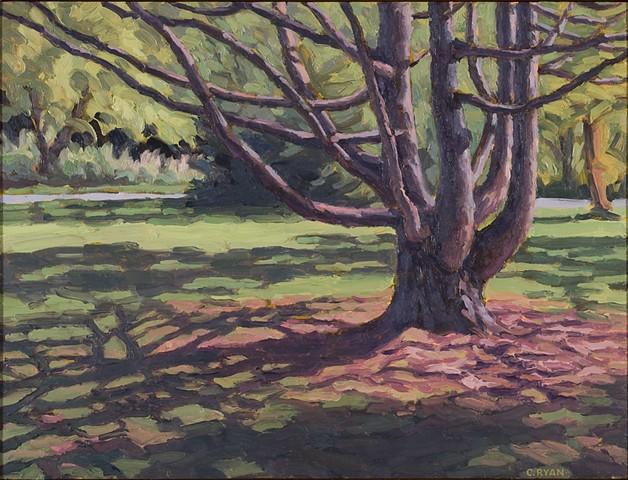 Field Station Tree, early fall