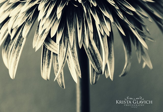 Krista Glavich Photography