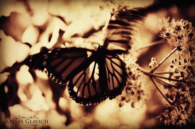 Monarch II