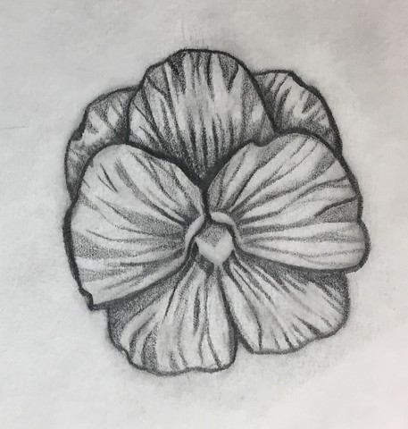 Little Pansy (sketch)