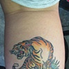 Ed Hardy Tiger on Julie (healed)