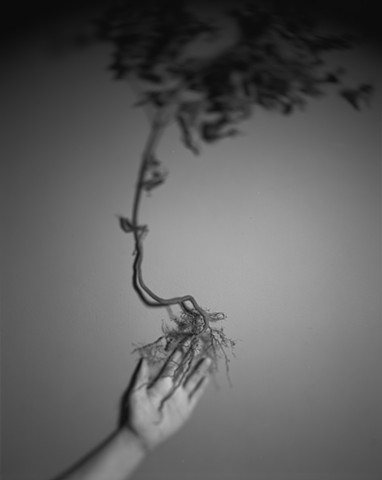 Untitled (Hand and Root)