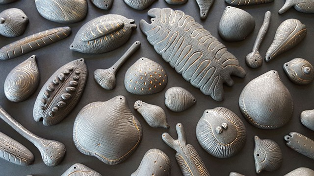 fossil studies comprised of black clay by Mary Meyer